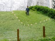 マーティンと草の長さ比較